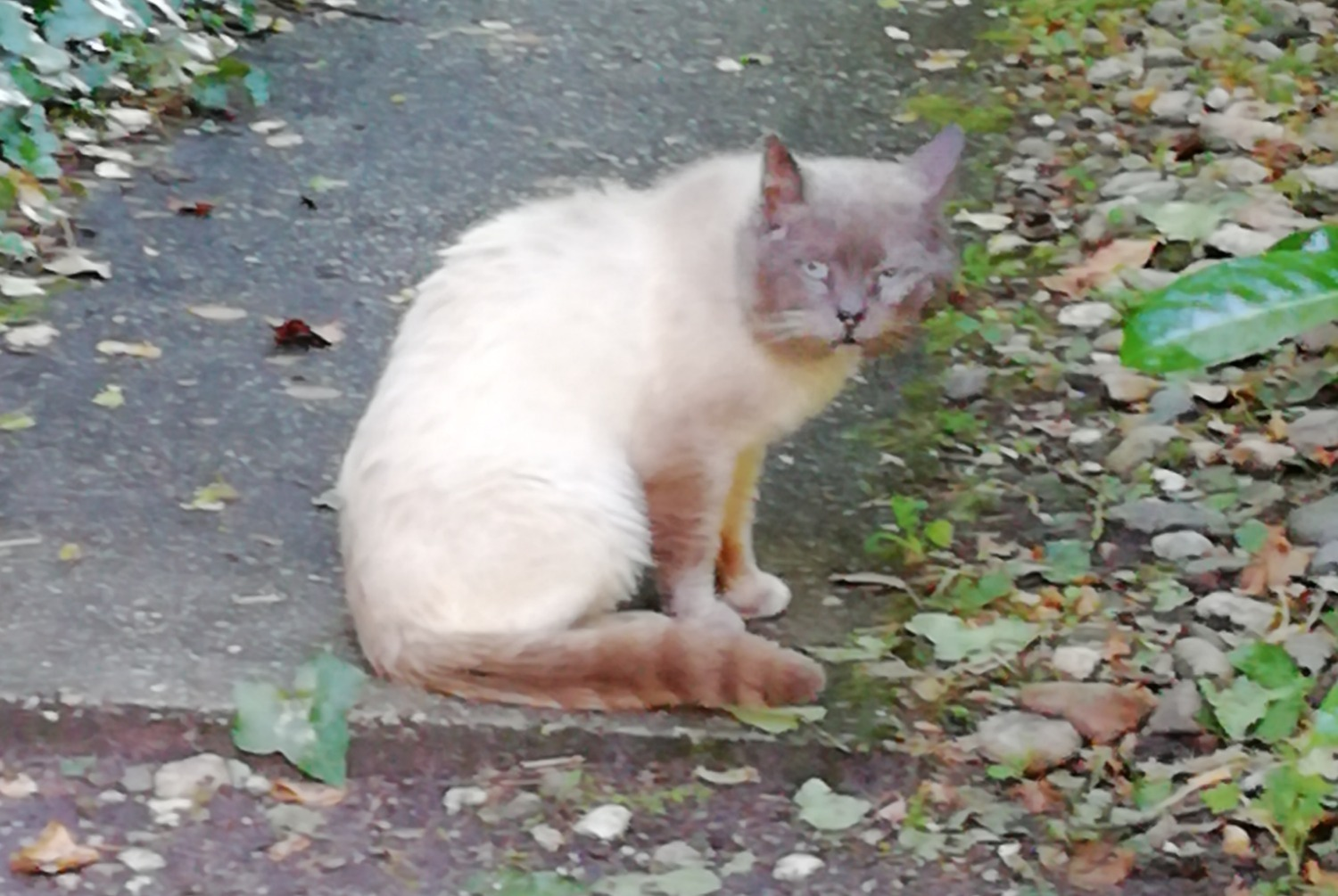 Alerta descoberta Gato Macho , 5 anos Bordeaux France